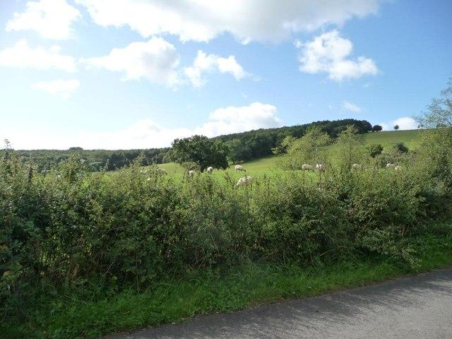 Sheep pasture, east of Coed-y-fon