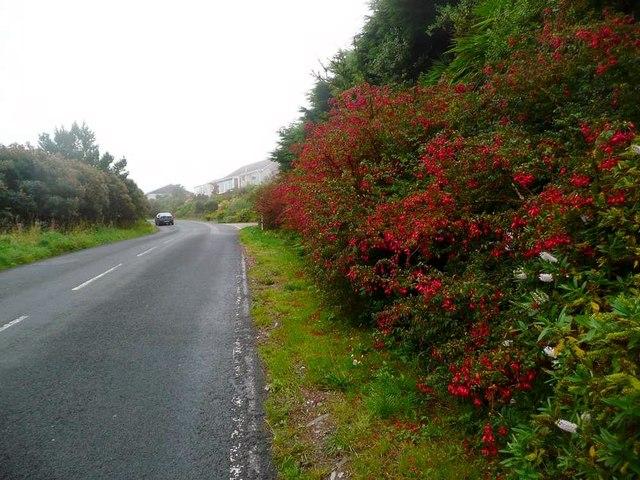 Fuchsia by the B842
