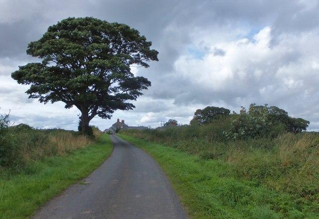 Road to North Ancroft Farm