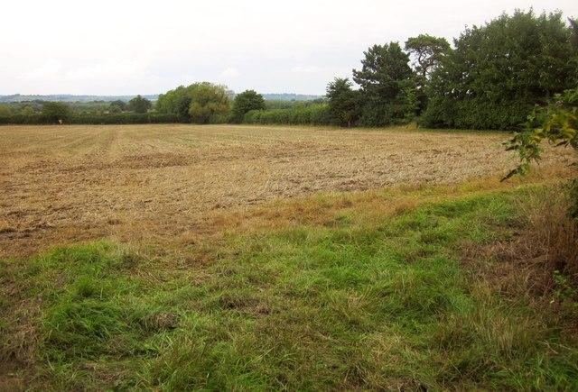 Field at Horsington