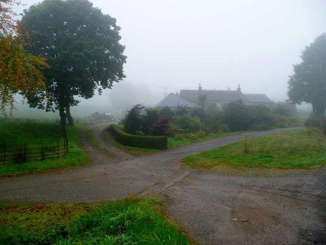Bunlarie in the mist