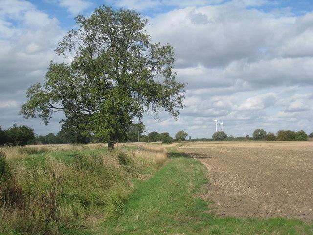 Alongside Eastrington Drain
