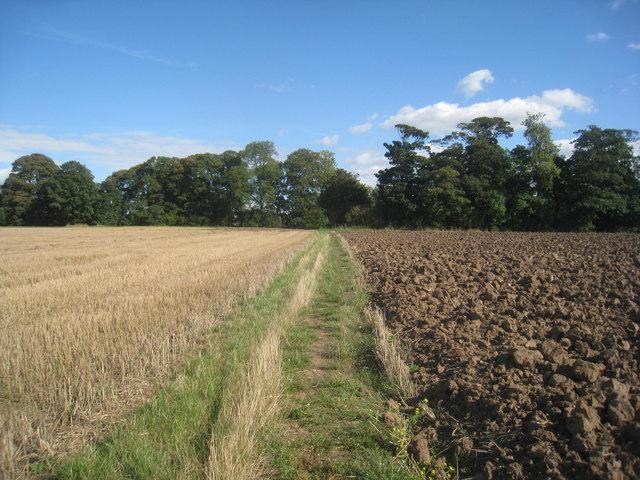 Bridleway to Cotness