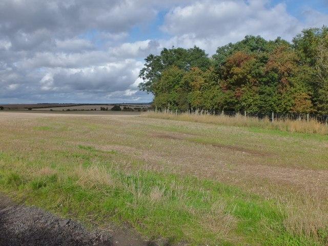 Farmland by bridleway
