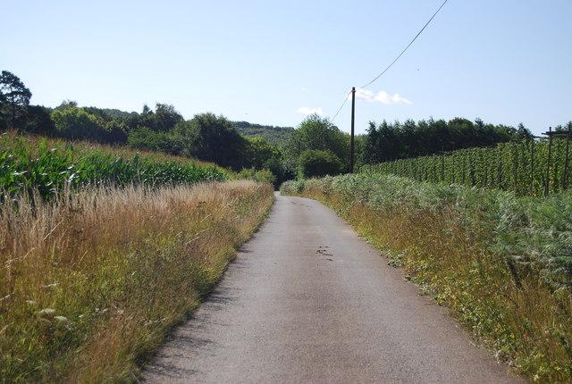 Track to Salehurst Park Farm