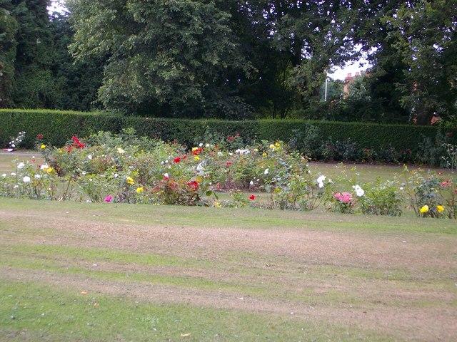 Roses in Netherton Park