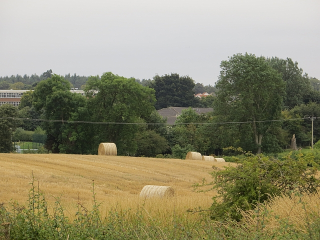 Round bales on the edge of Cupar