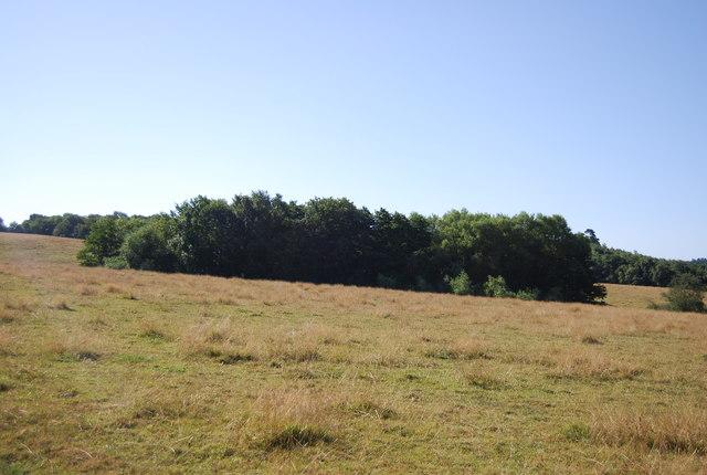 Small woodland