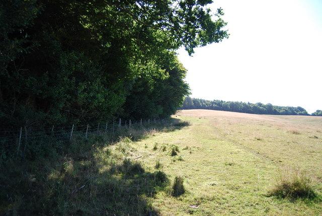 The edge of Wellhead Wood