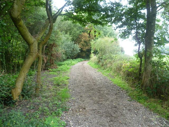 Bridleway through The Grapsome