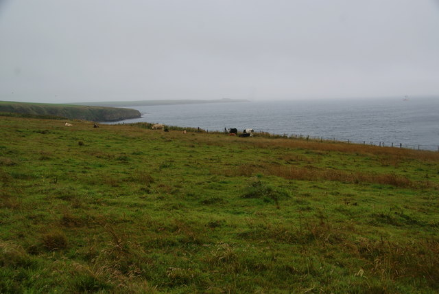 Grazing land for cattle near Heatherquoy