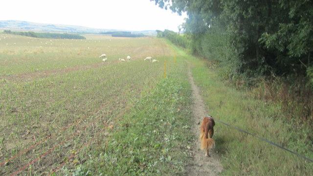 The Shepherd's Trail alongside Berry Copse