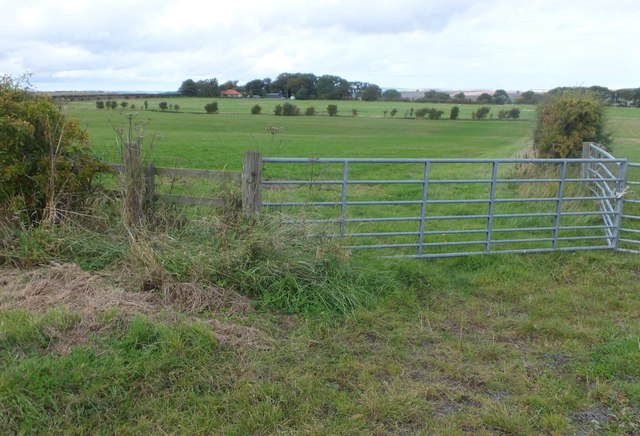 Farmland, East Allerdean