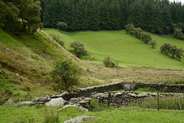 Field near Maesafallen