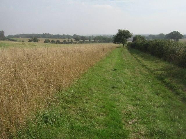 Wayfarer's Walk crossing Summer Down
