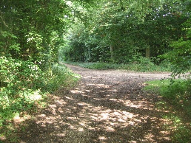 Tracks through Great Dean Wood