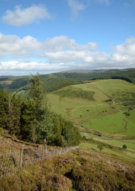 Forestry edge descending to Cwm Hirnant