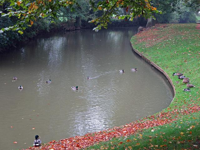 Ducks on Magdalen Water