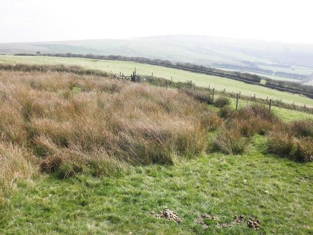 Rough grass on Castle Common
