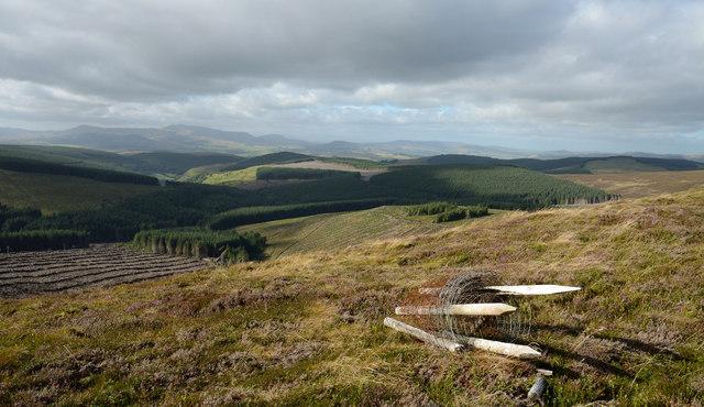 Forestry in Cwm Llusog