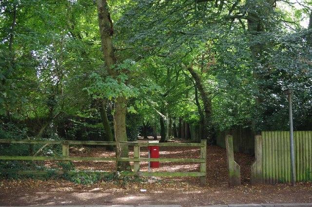 Footpath Through Windmill Wood, Gough's Lane
