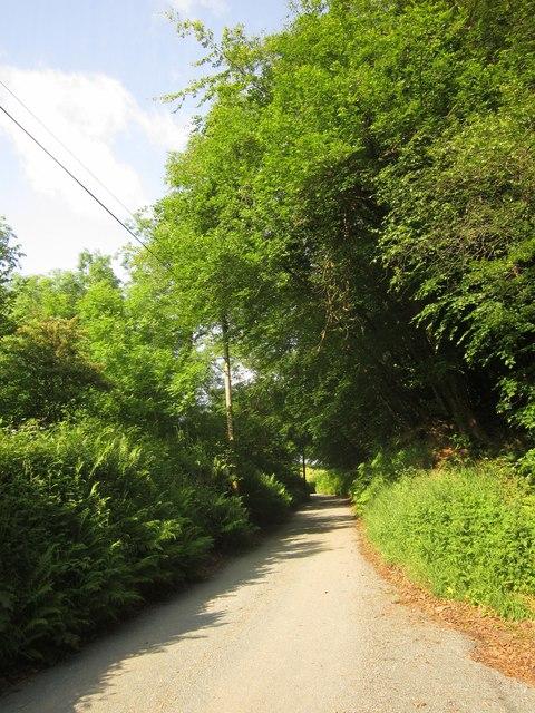 Lane past Vicarage Copse