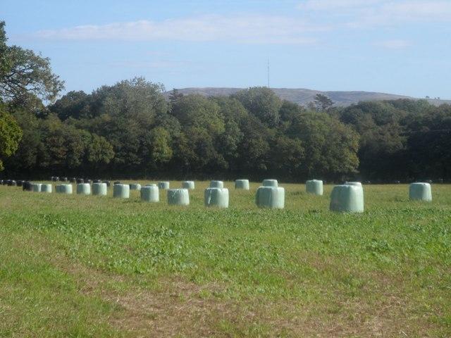Byrnau ger Coed Derw / Bales near Coed Derw
