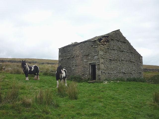 Fell ponies and barn near Blake Mire