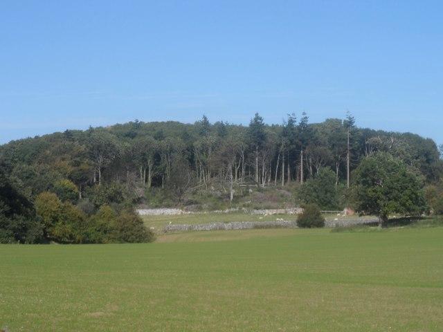 Coedwig ger Plas Heaton / Woodland near Plas Heaton
