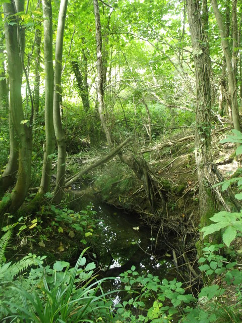 Stream in Starve Wood