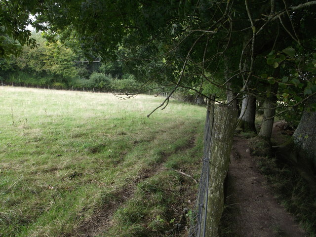 Sheeptrack beside Long Wood