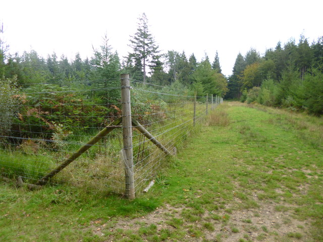 South Oakley Inclosure, deer-proof fencing