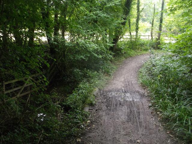 Round reservoir Route on a footbridge in Long Wood