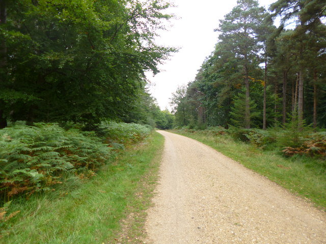 South Oakley Inclosure, cycle route