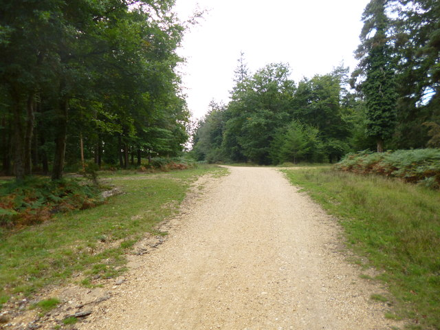 South Oakley Inclosure, forestry road junction