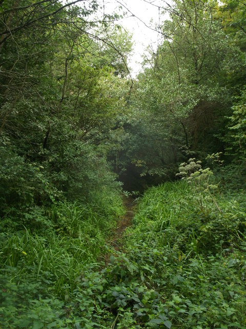 Blackman's Wood stream towards Bewl Water