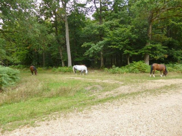 South Oakley Inclosure, ponies