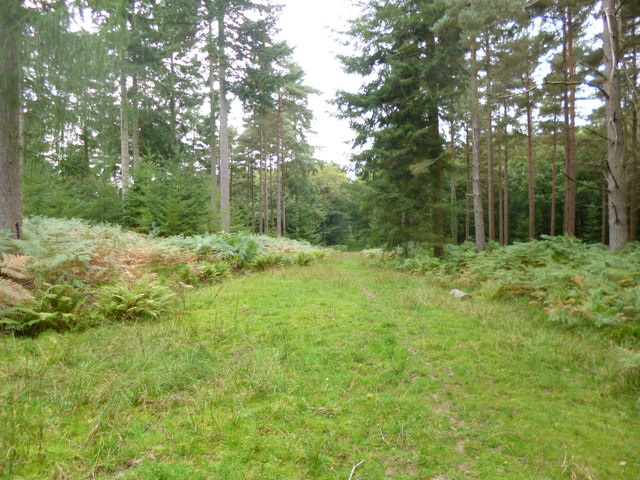 South Oakley Inclosure, forestry track