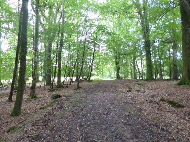 Burley Outer Rails Inclosure, forestry track
