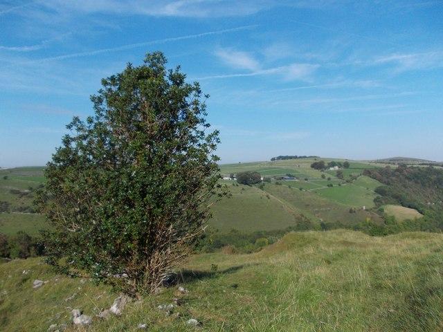 A holly bush above Miller's Dale, Derbyshire