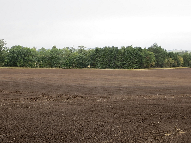 A newly planted field