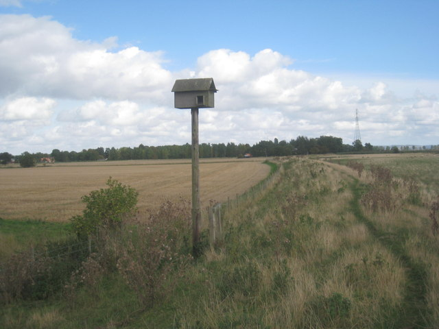 Owl box and the Ouse flood bank