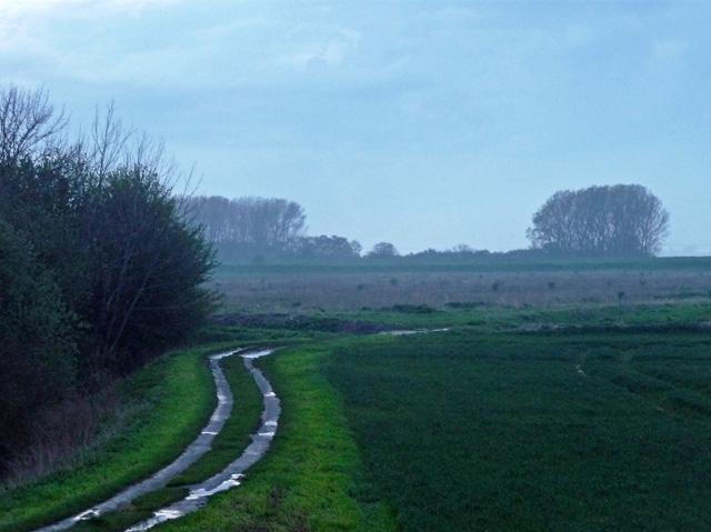 Farmland near Cowbit