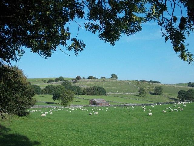 Sheep pasture east of Priestcliffe