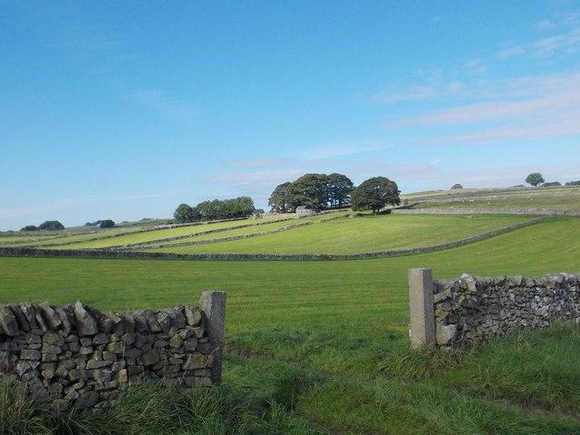 View to Heathydale Ward
