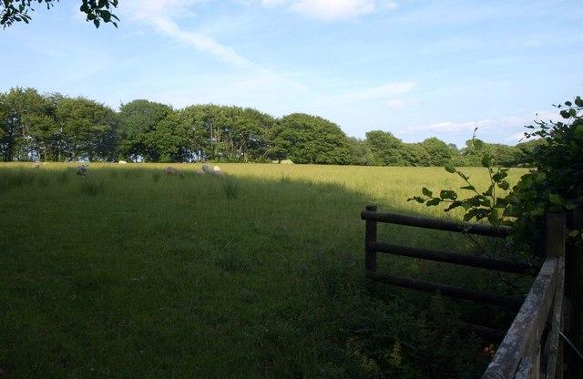 Sheep pasture, Whiteford Cross