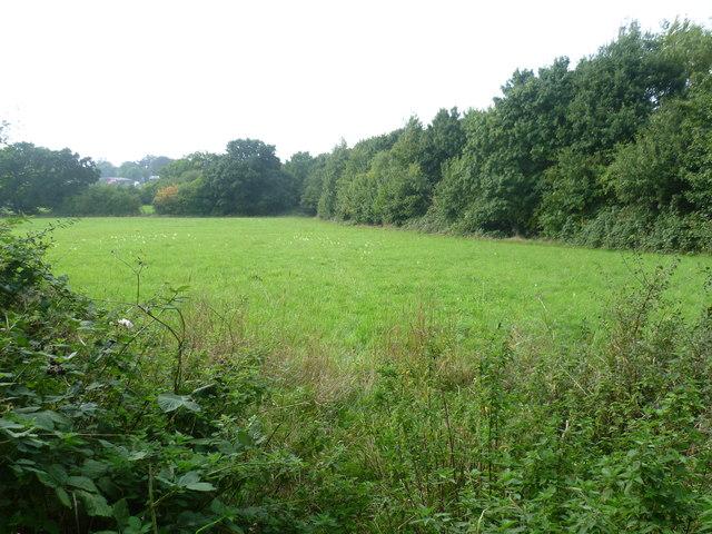 Field near Mansfield Road, Chessington
