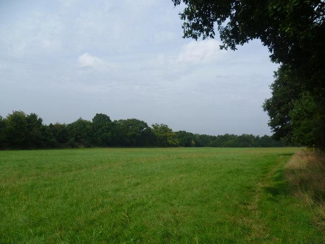 Field on the edge of Chessington