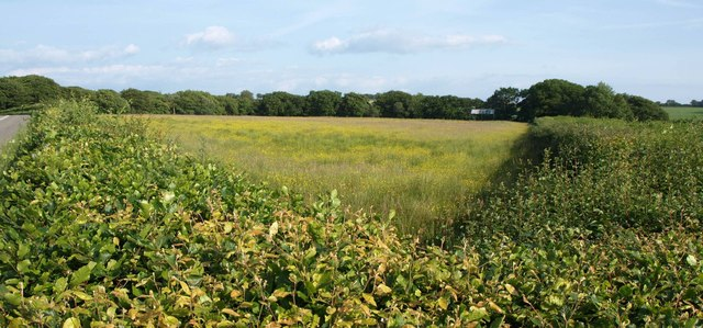 Meadow, Whiteford Cross