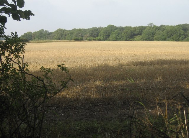 Harvested field & Frith Wood
